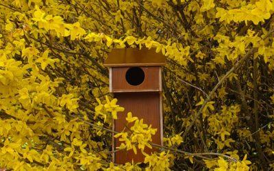 Le DIY du mois : le nichoir à oiseaux