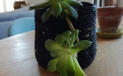 Conseils jardinage : bouturer une feuille de succulente