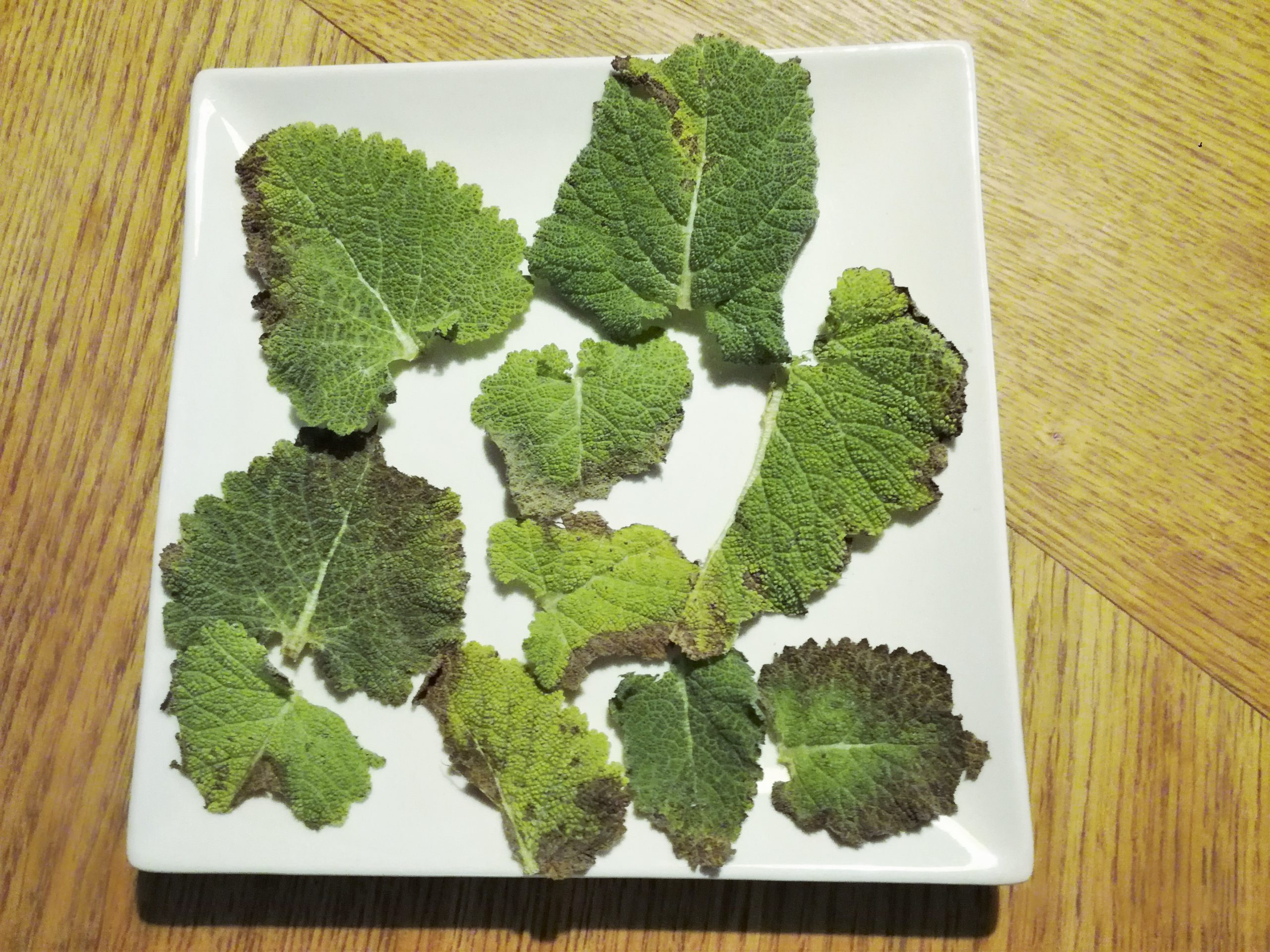 feuilles sauge sclarée recette