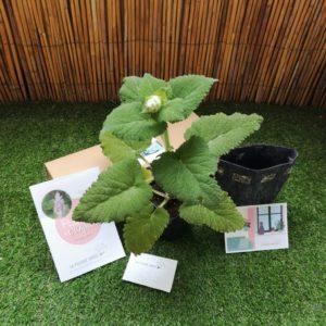 abonnement box plante fleurs comestibles