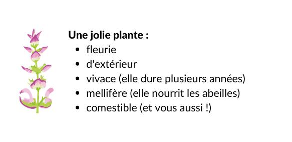 Image contenu box_plante