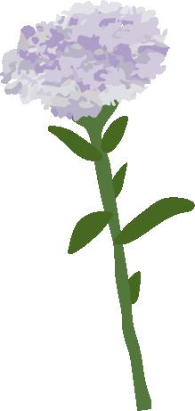 valeriane plante dessin