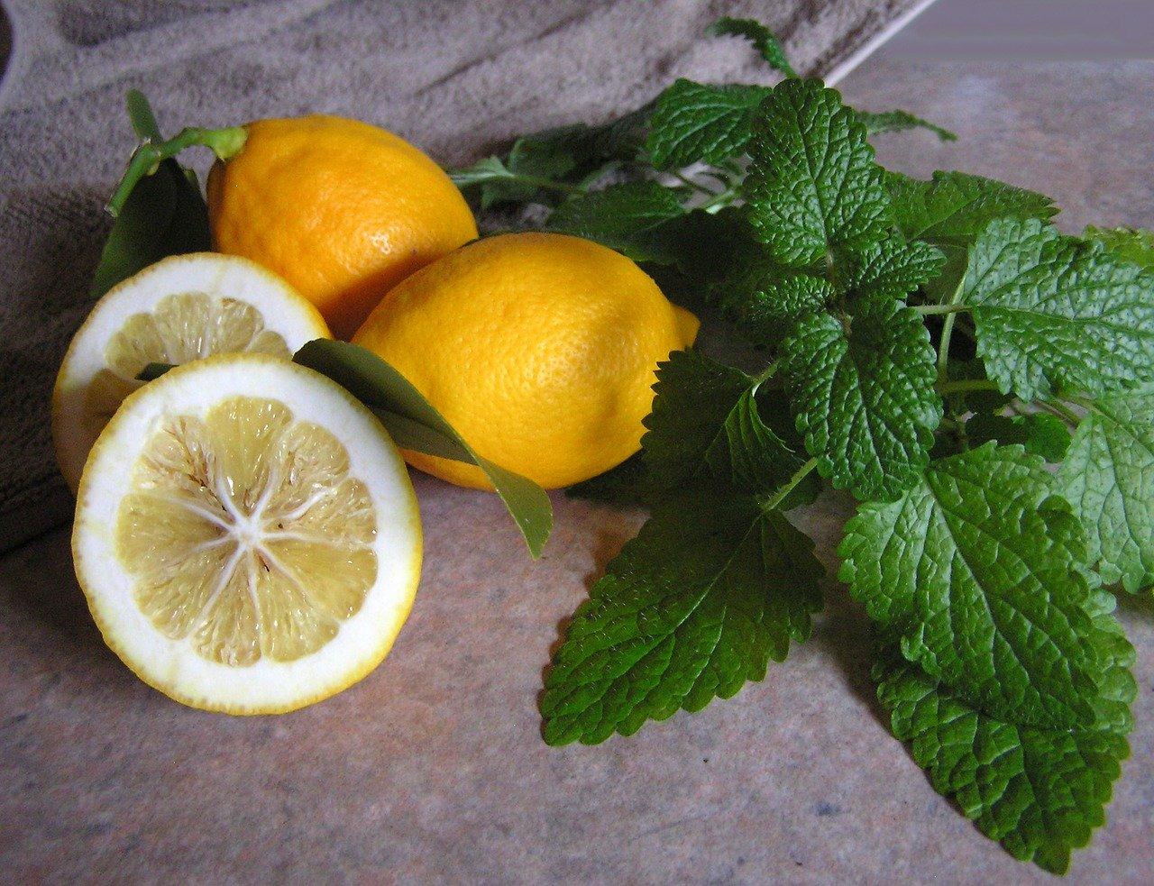 melisse plante arome citron