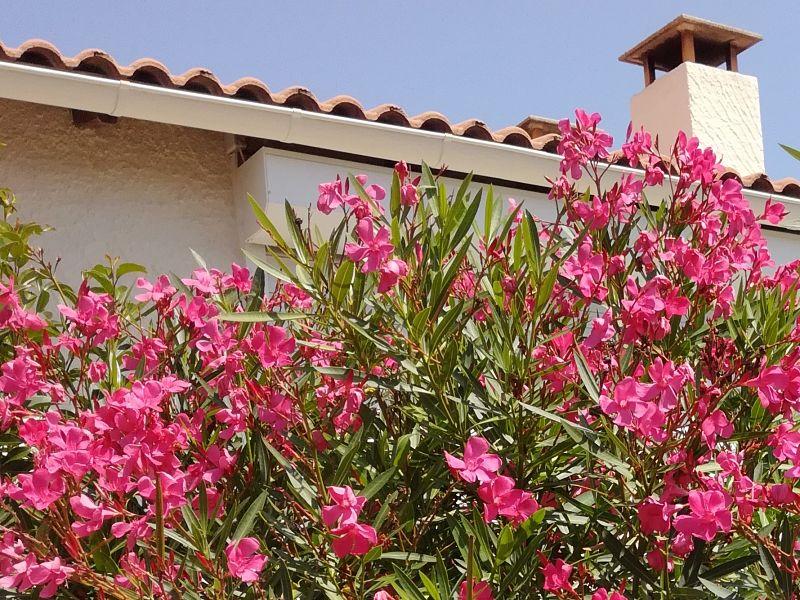La plante du mois : le laurier rose, conseils jardinage et découverte