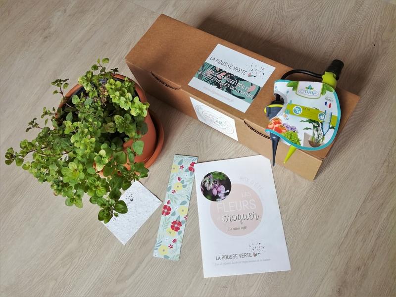 box plantes été