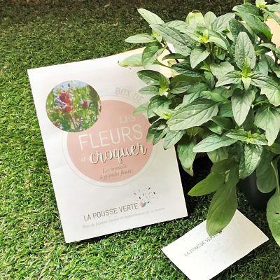 box plantes conseils jardinage