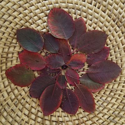 feuilles automne rose diy