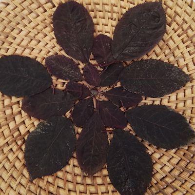 feuilles automne rouge photophore