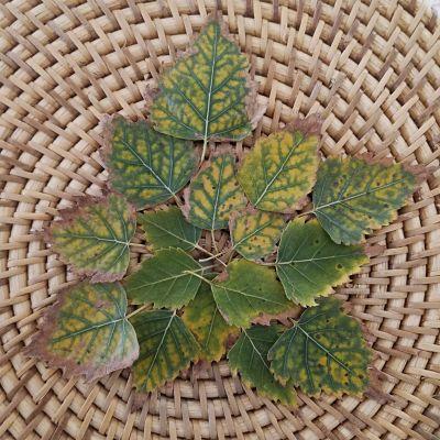 feuilles automne vert tuto