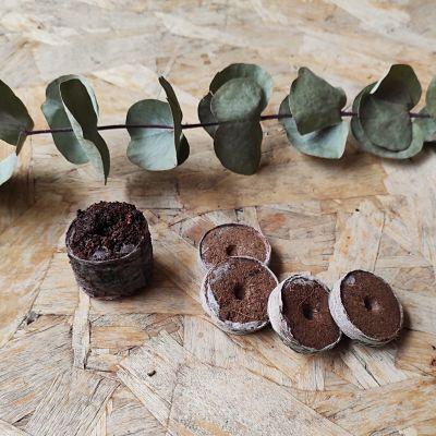 pastille coco semis graines jardinage
