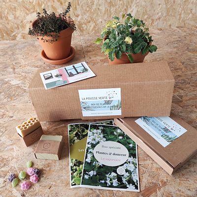 box plantes fleurs cadeau