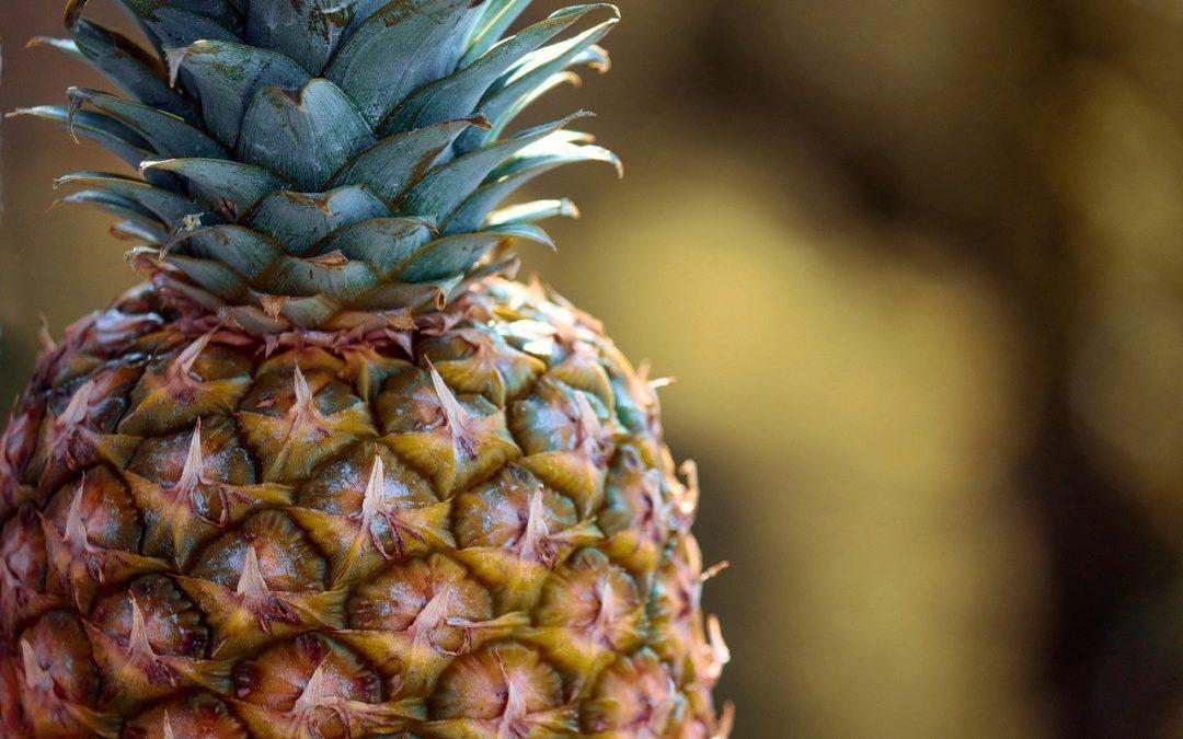 tuto bouture ananas jardinage DIY