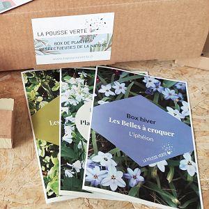 box plante conseils jardinage