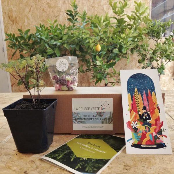box plantes hiver fleurs comestibles