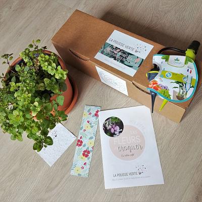 Box plante été