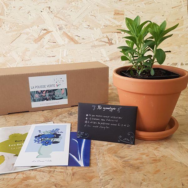 box plantes fleuries printemps la pousse verte