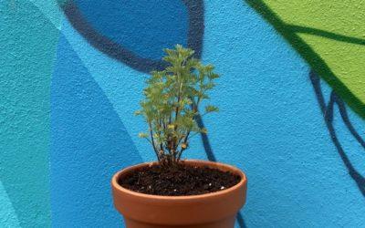 Tuto DIY : comment rempoter une plante ?