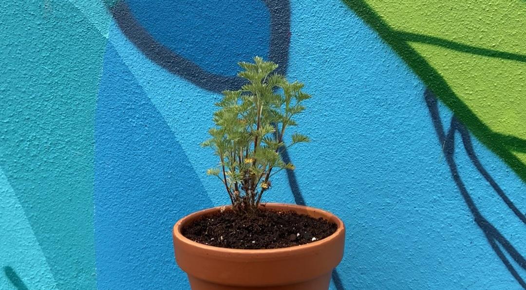 comment rempoter plante