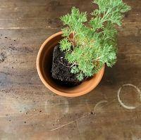 rempotage plante pot