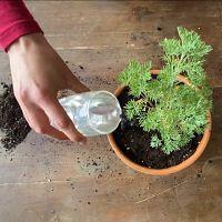 rempotage plante jardinage arrosage