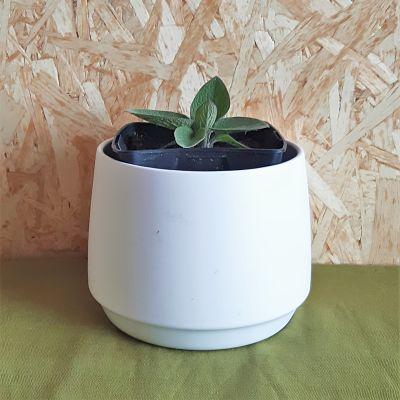 consoude plante jardinage vivace non traitee
