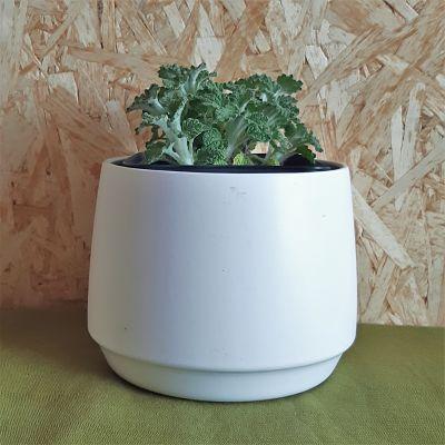 marrube plante infusion vivace médicinale