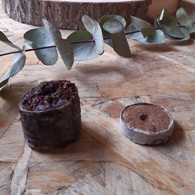 pastilles coco semis jardinage