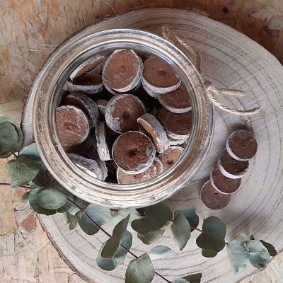 pastilles coco semis graines