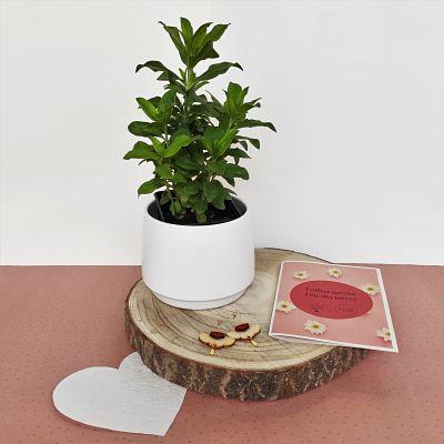 cadeau fete meres plante bijoux ecoresponsable
