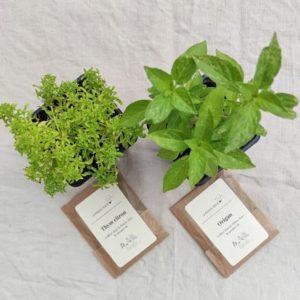coffret cadeau fete peres plantes aromatiques