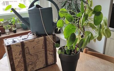 Tuto DIY : arrosage des plantes en vacances facile