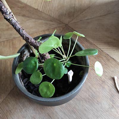 tuto arrosage DIY facile plantes
