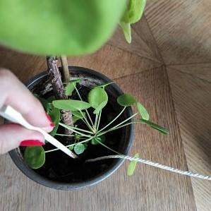 tuto arrosage DIY facile plantes vacances