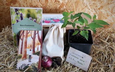 La box de plante écoresponsable de l'automne 2021