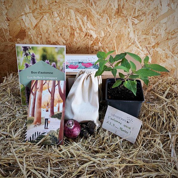 box plante écoresponsable fleurs comestibles automne